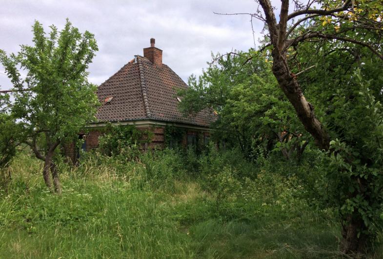 Otto Busses Vej - Bevaringsværdige træer