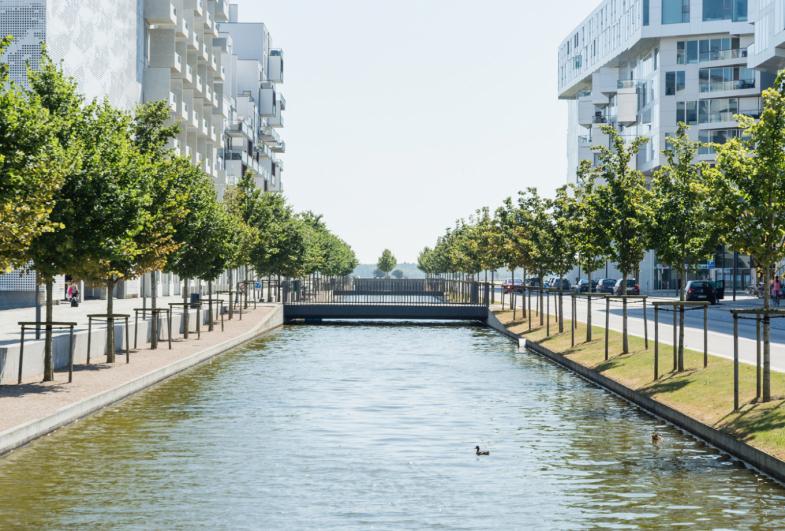 Beplantningsrådgivning, Ørestad og Nordhavn