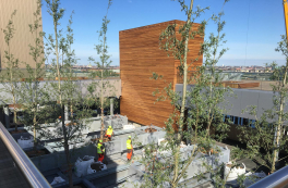 Trees and tree trunks adorn Copenhagen's new power plant