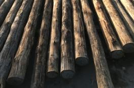 Københavns nye grønne vartegn får facade af træstammer